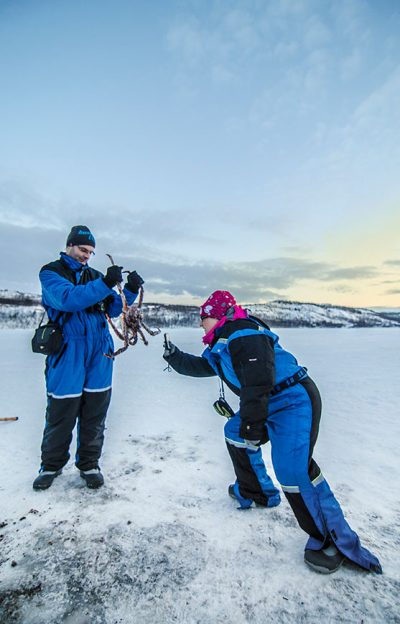 Kirkenes King Crab Tour